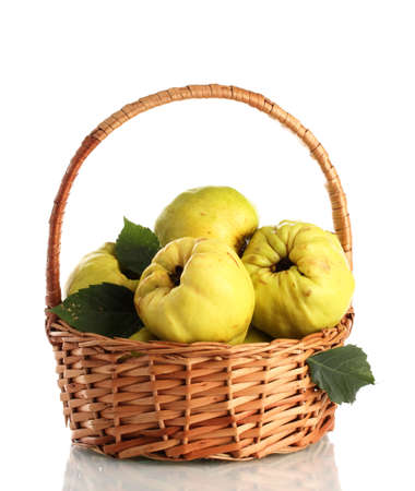 quinces: sweet quinces with leaves in basket, isolated on white