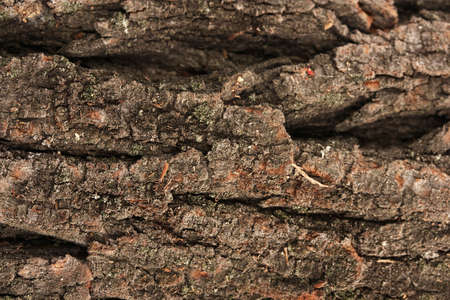 brown bark background photo