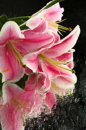 beautiful pink lily, on grey background photo