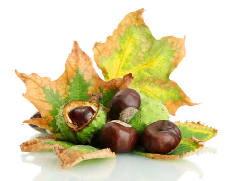 Chestnuts with autumn dried leaves, isolated on white Stock Photo - 16132025