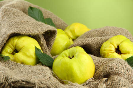 quinces: sweet quinces with leaves, on burlap, on green background