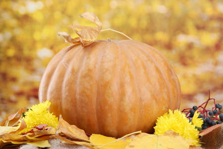 pumpkin and autumn leaves, on yellow background photo