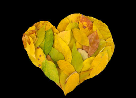 Bright autumn leaves lie in shape of heart isolated on black photo