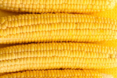 fresh corn, close up photo