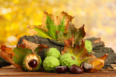 Chestnuts with autumn dried leaves and bark photo