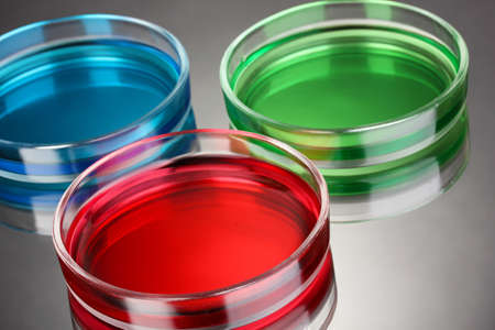 color liquid in petri dishes on grey background Stock Photo - 16276263