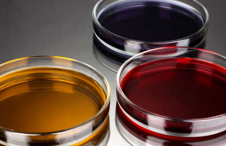 color liquid in petri dishes on grey background Stock Photo - 16275996