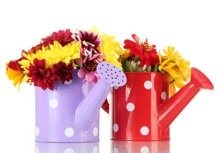 beautiful summer flowers in watering cans, isolated on white photo