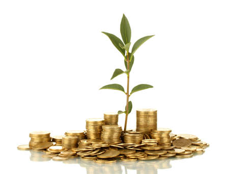 make money: plant growing out of gold coins isolated on white
