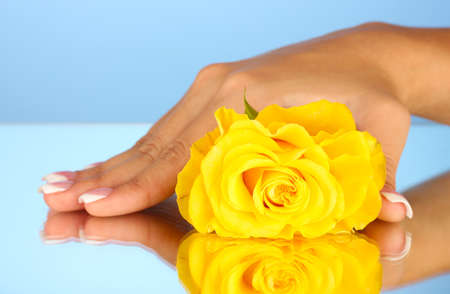Yellow rose with woman's hand on blue background, close-up photo