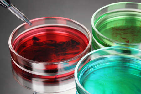 color liquid in petri dishes on grey background Stock Photo - 16344949
