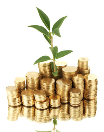 plant growing out of gold coins isolated on white Stock Photo - 16343305