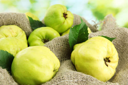 sweet quinces with leaves, on burlap, on green background photo