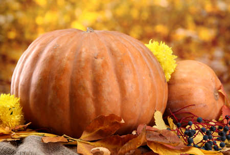 pumpkins and autumn leaves, on yellow background photo