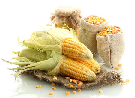 fresh corn and bags with dry corn, isolated on white photo