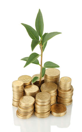 plant growing out of gold coins isolated on white Stock Photo - 16440494
