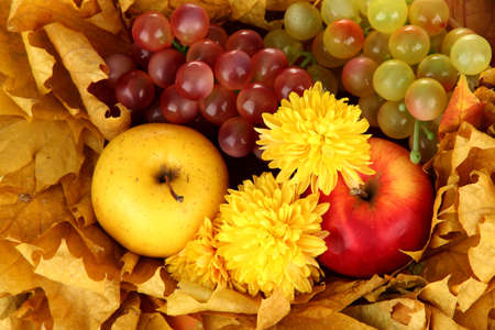 Autumnal composition with yellow leaves, apples and grape background Stock Photo - 16472955