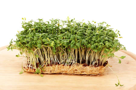 Fresh cress salad on wooden board isolated on white photo