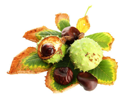 Chestnuts with autumn dried leaves, isolated on white Stock Photo - 16499746