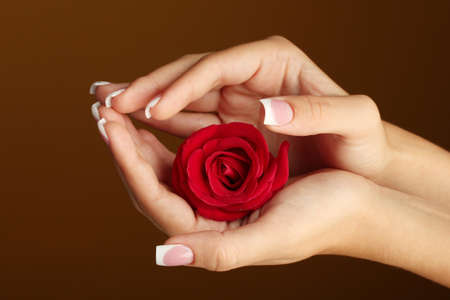 Red rose with womans hands on brown background photo