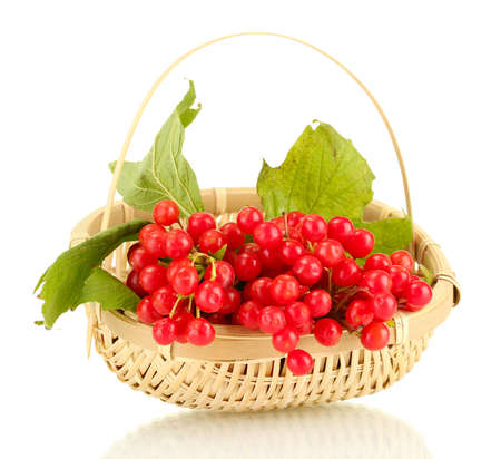 Ripe viburnum in a wicker basket isolated on white photo
