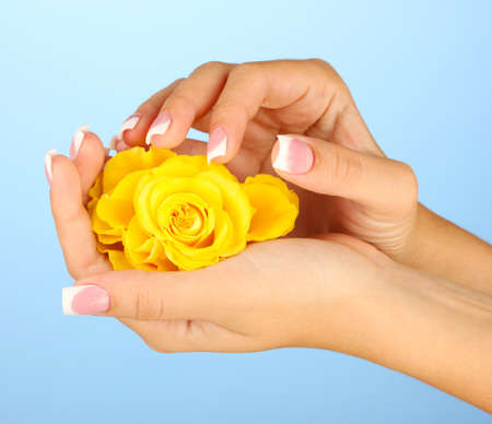 Yellow rose with woman's hands on blue background photo