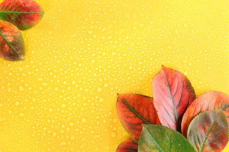 bright autumn leaves on yellow background photo