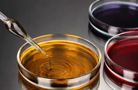 color liquid in petri dishes on grey background Stock Photo - 16646929