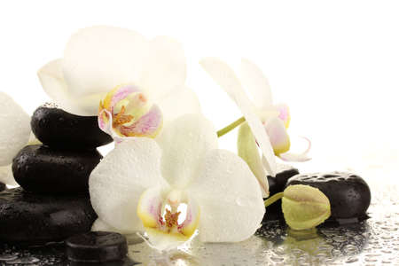 black pebbles: Spa stones and orchid flowers, isolated on white