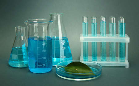 test-tubes and leaf tested in petri dish on grey background Stock Photo - 16739609