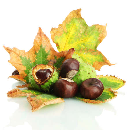 Chestnuts with autumn dried leaves, isolated on white Stock Photo - 16765072