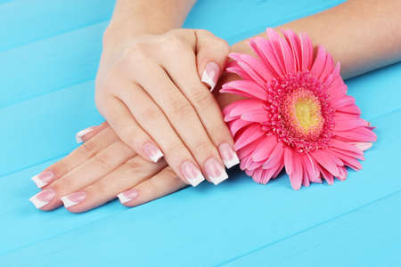 french manicure: Woman hands with french manicure and flower on blue wooden background Stock Photo