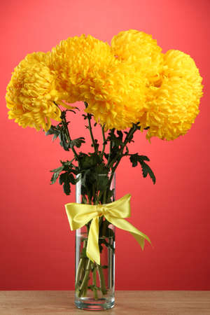 bright yellow chrysanthemums in glass vase, on red background photo