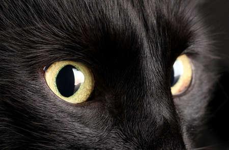 Black cat, close up Stock Photo - 16859658