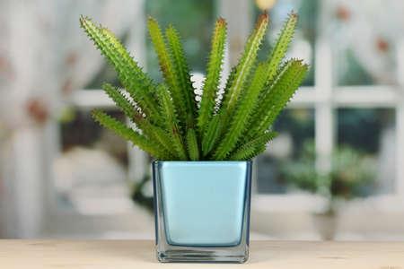 Cactus in vase on windowsill Stock Photo - 16859514