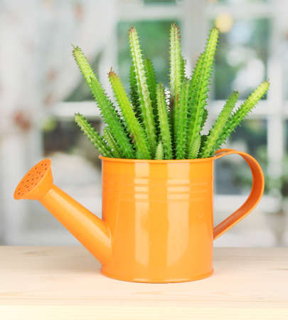 Cactus in watering can on windowsill Stock Photo - 16859400