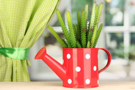 Cactus in watering can on windowsill Stock Photo - 16859488
