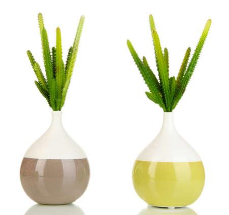 Cactuses isolated on white photo
