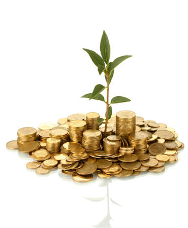 plant growing out of gold coins isolated on white Stock Photo - 16937882