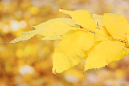 bright autumn leaves, on yellow background Stock Photo - 16939226