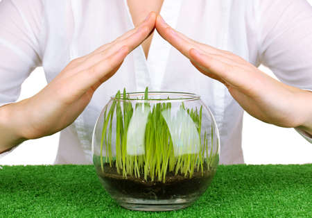 Hands protects glass vase with growing grass photo