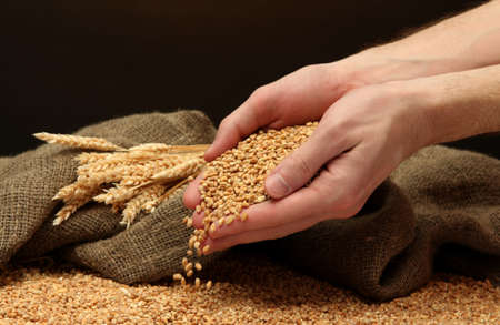 man hands with grain, on brown background Stock Photo - 16939308