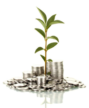 make money: plant growing out of silver coins isolated on white Stock Photo