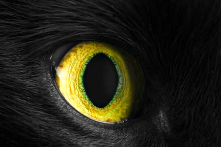 green cat eye, close up photo