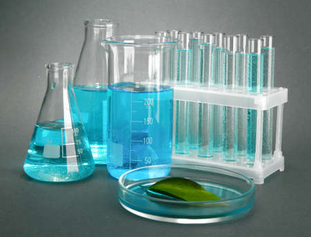 test-tubes and leaf tested in petri dish on grey background Stock Photo - 17001066