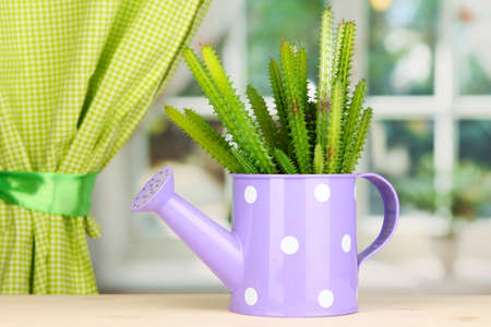 Cactus in watering can on windowsill Stock Photo - 17001175