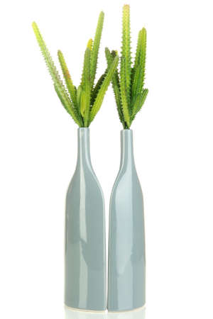 Cactuses in vase isolated on white Stock Photo - 17037129