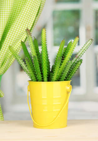 Cactus in pot on windowsill Stock Photo - 17037903