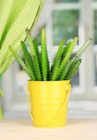 Cactus in pot on windowsill Stock Photo - 17037903
