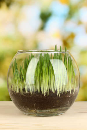 Grass in glass vase on bright background photo